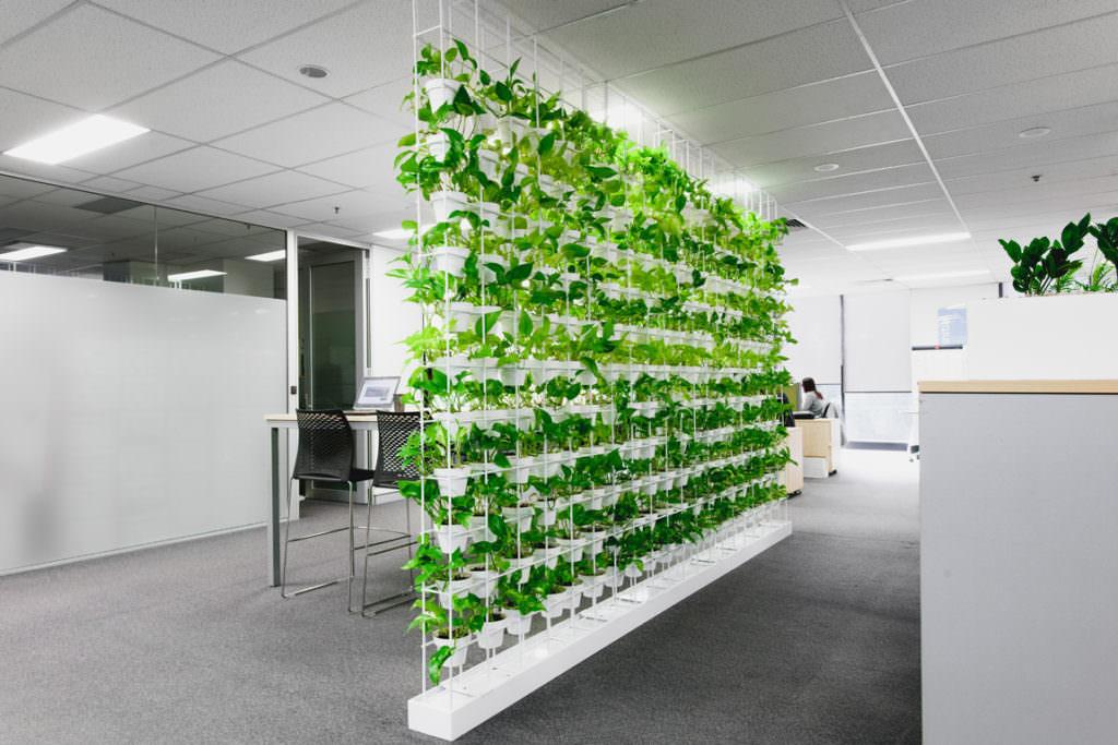Експерти SHEN: Сучасні тенденції озеленення простору
