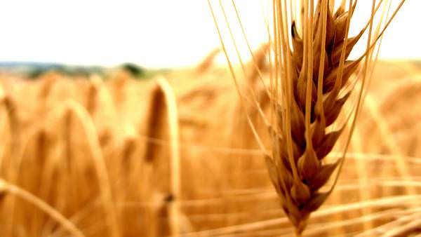 TOP найбільших агропромислових підприємств в Україні або чому автоматизація є секретом успіху