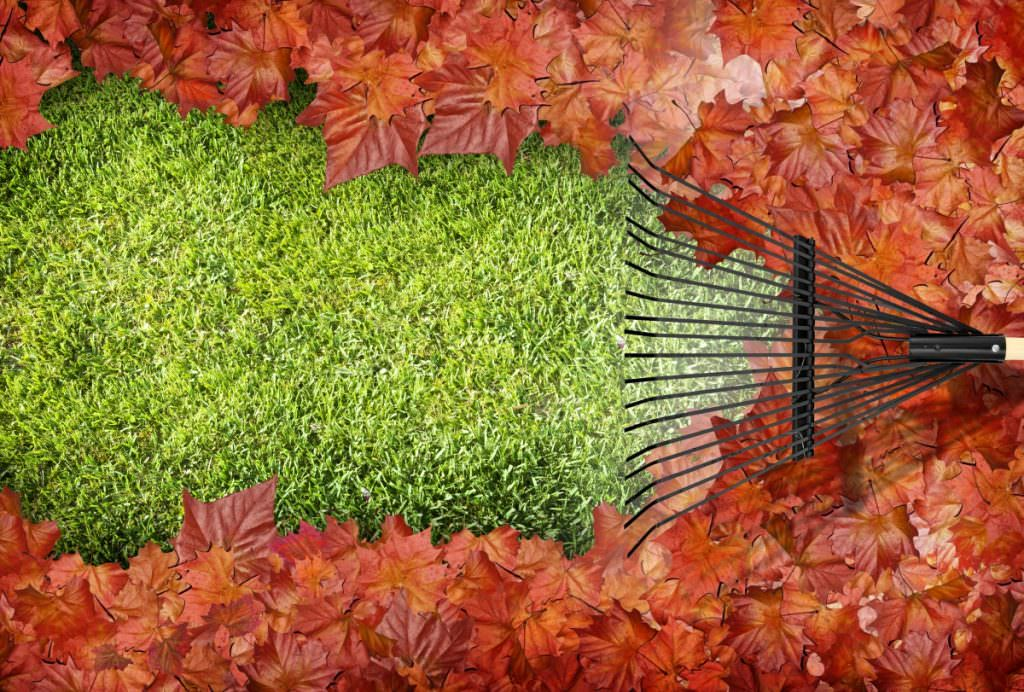 Cleaning in the autumn and winter. What to look for